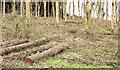 J4477 : Felled trees, Cairn Wood, Craigantlet - February 2015(4) by Albert Bridge