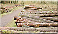 J4577 : Felled trees, Cairn Wood, Craigantlet - February 2015(7) by Albert Bridge