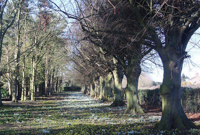 Snowdrops and aconites at Old Fordey House
