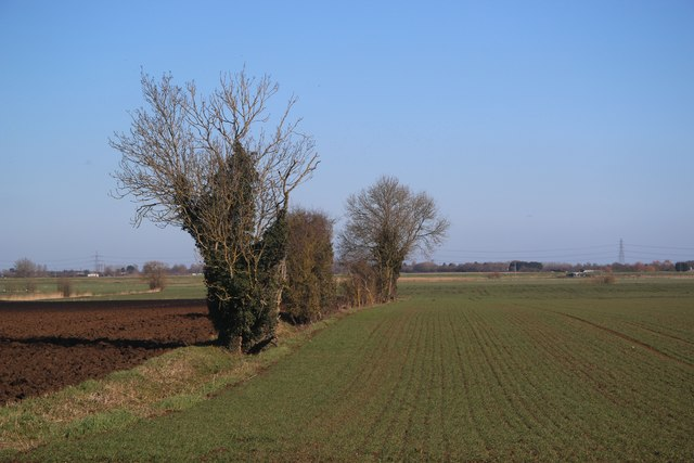 Field boundary at Padney