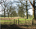 TG1602 : Disused avenue leading to Ketteringham Hall by Evelyn Simak