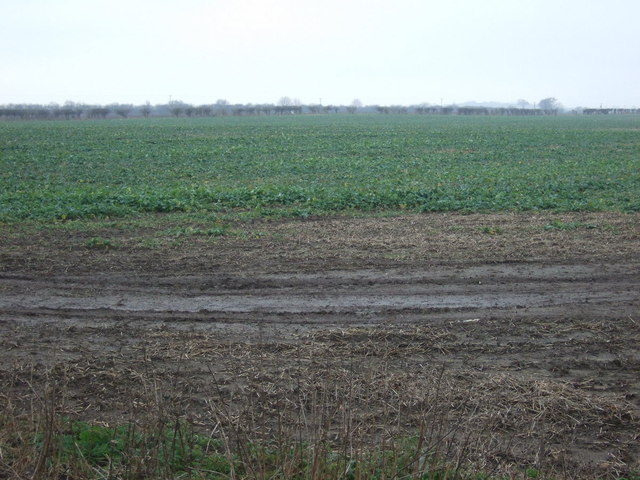 Crop field off Whitecross Road (A165)