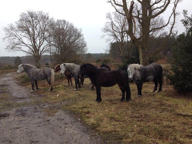 Holt Lowes - ponies