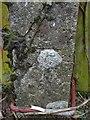 ST6321 : Benchmark on concrete postbox post near Wheatsheaf Farm by Becky Williamson