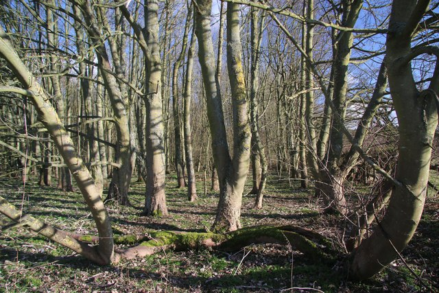 Inside the copse