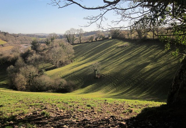 Shadows by the drive to Sharpham