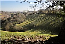 SX8158 : Shadows by the drive to Sharpham by Derek Harper