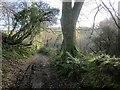SX8354 : Dart Valley Trail on Broadgates Lane by Derek Harper