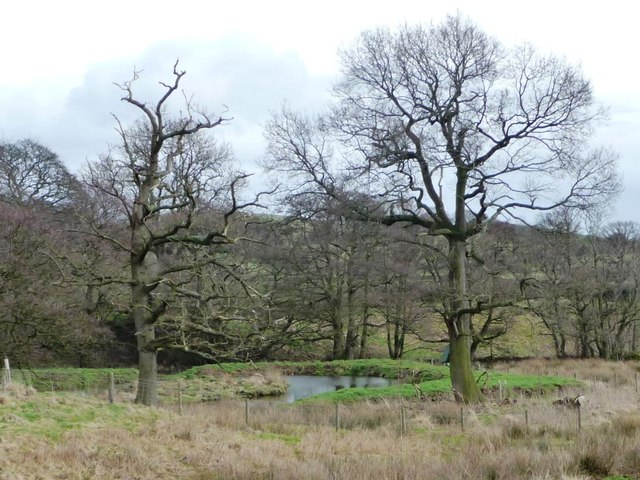 Winter trees by the collects feeding West Beck
