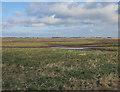 TL2189 : Great Fen habitat creation by Hugh Venables