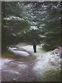 SD3493 : Snowy path in Grizedale Forest by Karl and Ali