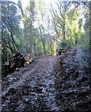 SX9065 : Path junction, Chapel Hill Pleasure Grounds by Derek Harper