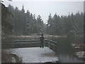 SD3494 : Snowing at Grizedale Tarn by Karl and Ali