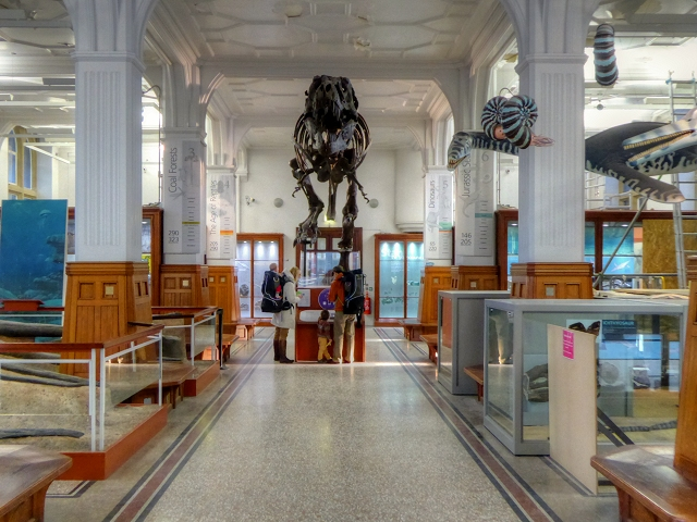 Manchester Museum Fossils Gallery