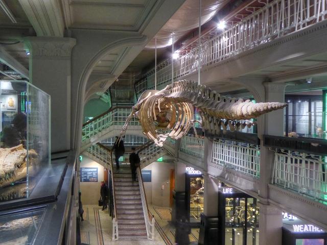 Sperm Whale Skeleton, Living Worlds Gallery