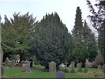 SD5095 : St Oswald, Burneside: churchyard (8) by Basher Eyre
