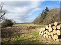 NZ1722 : Timber stacks beside Trunnelmire Plantation by Trevor Littlewood