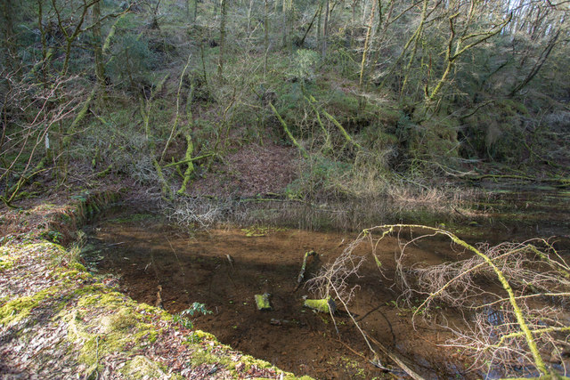 Artificial pond in Holne Woods