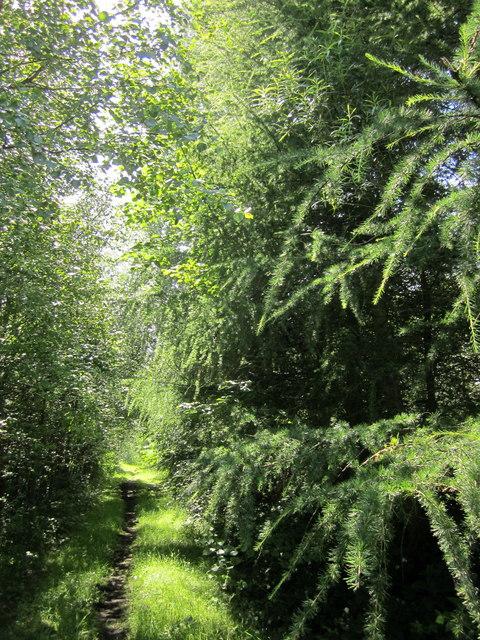 Path by Longdendale Trail