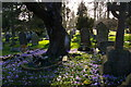 TQ4464 : Crocuses in the graveyard of St Giles the Abbot, Farnborough by Christopher Hilton
