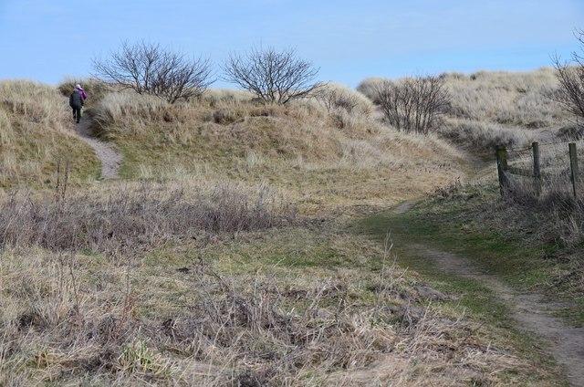 Paths through the dunes, Druridge