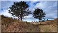 NU1834 : Pair of Trees, Redbarns Links by Mick Garratt