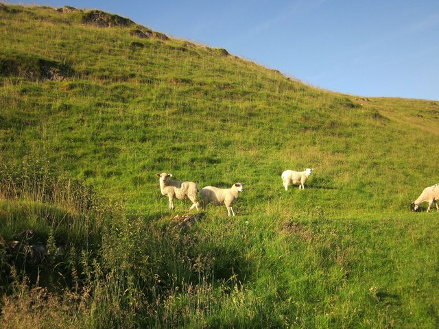 Sheep, Cave Dale