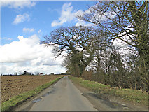 TM2567 : Oaks beside the road at Tannington by Adrian S Pye