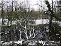 H4478 : Swampy ground, Tantramurry by Kenneth  Allen