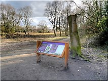 SJ8381 : Entrance to Lindow Common by David Dixon