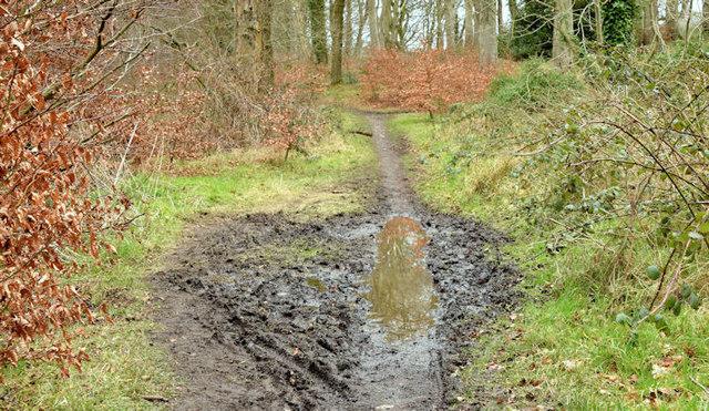 Muddy path, Clandeboye, Bangor (March 2015)