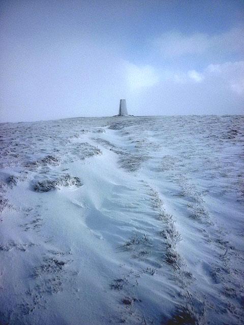 The Calf (in a blizzard)