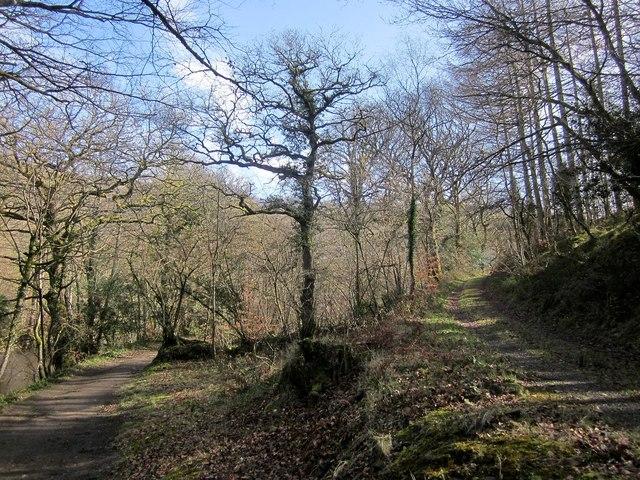 Path and bridleway, Cod Wood