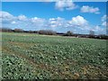 SK3227 : Field of Vegetables near Milton by Jonathan Clitheroe