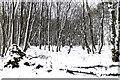 NO0200 : Path in Lendrick Muir woodland by William Starkey