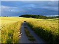 SU8088 : Road and farmland, Hambleden by Andrew Smith