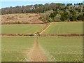SU8195 : Farmland, West Wycombe by Andrew Smith