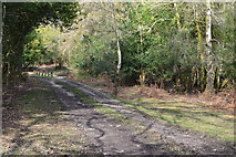 SU2808 : Path in the woods near Emery Down by David Martin