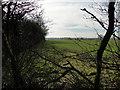 TM2668 : Field off King's Lane by Adrian S Pye