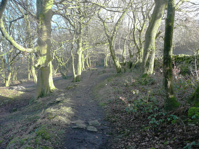 The Calderdale Way in North Dean Wood