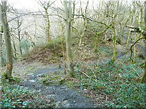 SE0722 : Elland FP004 in North Dean Wood by Humphrey Bolton