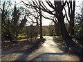 TQ2786 : Sunlight and shadows, Hampstead Heath by Malc McDonald
