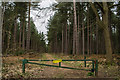 SK8556 : Gated track into Stapleford Wood by J.Hannan-Briggs