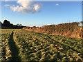 SJ8051 : Bignall End: field by Jonathan Hutchins