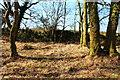 NX4959 : Balloch Wood & Stane Dyke by Billy McCrorie
