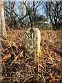 SE9694 : Boundary  Stone  Reasty  Bank  Top by Martin Dawes