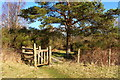 NX6181 : Kissing Gate on the Southern Upland Way by Billy McCrorie