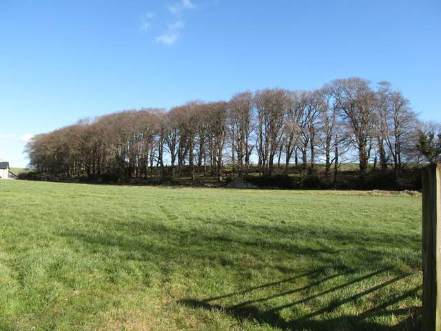 Shelter belt along the boundary of the Seaforde Demesne