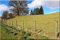 NX6280 : Field in Dalry by Billy McCrorie