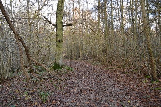 Sussex Border Path, Horsegills Wood